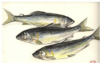 たかね500号記念 全国誌上大会 魚